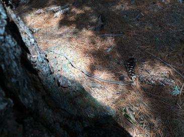 The dreaded Erables Portage Snake