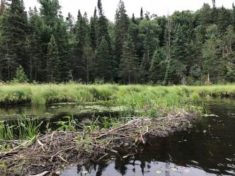 Another beaver dam. Sigh.