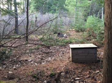 """From my ongoing series, """"Thunderboxes in the Wild"""""""